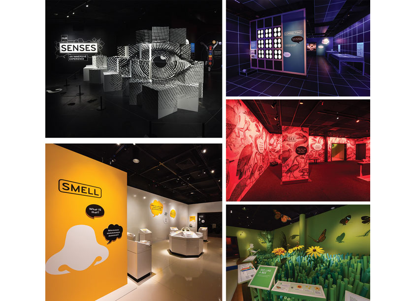 Our Senses Exhibition Design by American Museum of Natural History