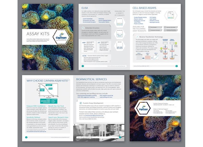 Assay Kits Brochure by Cayman Chemical Company