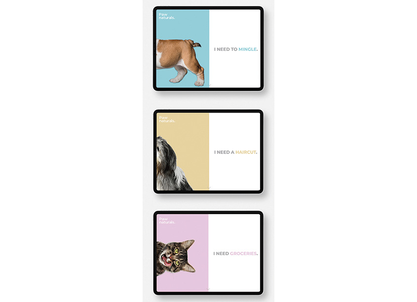 Eunice Choi Design Paws Natural Website Rebranding